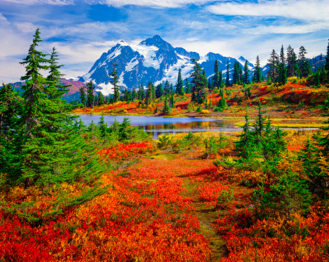 Mount Shuksan Picture Lake Washington Brilliant Carpet Orange Autumn Colors Stock Photo - Download Image Now