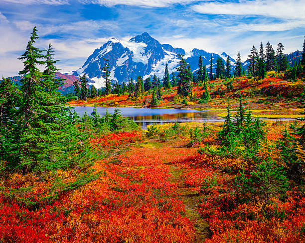 Mount Shuksan, Picture Lake, Washington, brilliant carpet orange autumn colors North Cascades National Park, Mt. Shuksan and Picture Lake in the fall, with carpet of brilliant red blueberry bushes national forest stock pictures, royalty-free photos & images