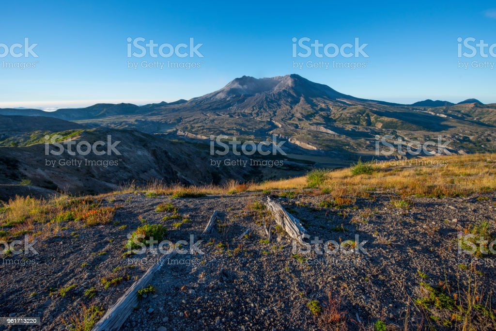 Mount St Helens blast zone and remains of fallen trees, Washington state stock photo