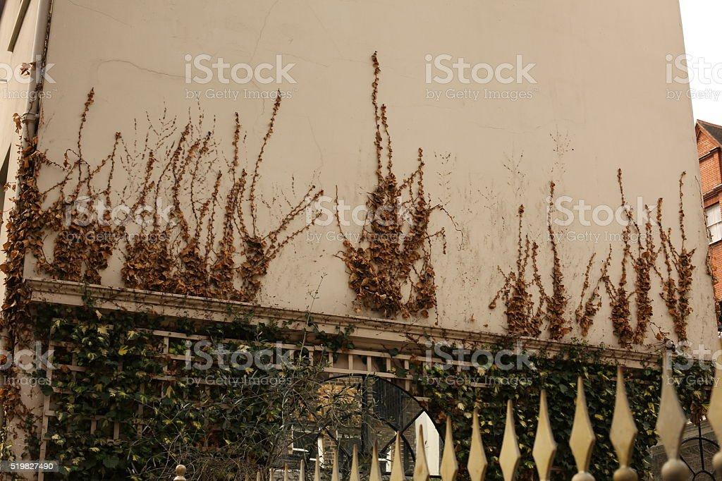 Mount Street Garden stock photo