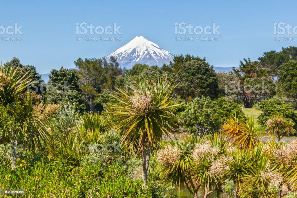 Mount Taranaki and Native New Zealand Bush stock photo