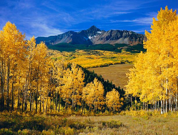 Mount Wilson With Autumn Aspen Trees stock photo