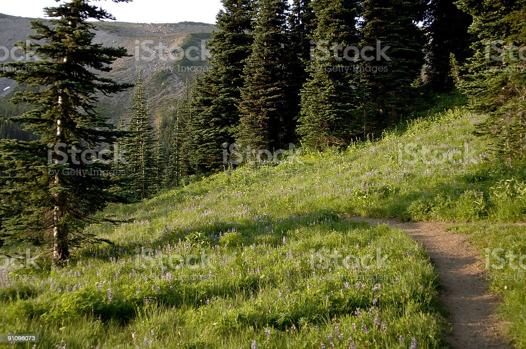 Mountail trail surrounded by wild flowers stock photo