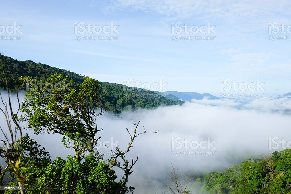Mountain and Beautiful fog at Chong yen, Thailand foto royalty-free