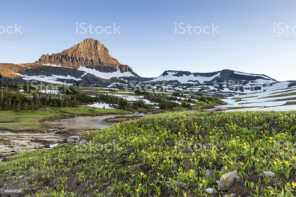 Mountain and wildflowers filed at Logan Pass, Glacier National Park stock photo