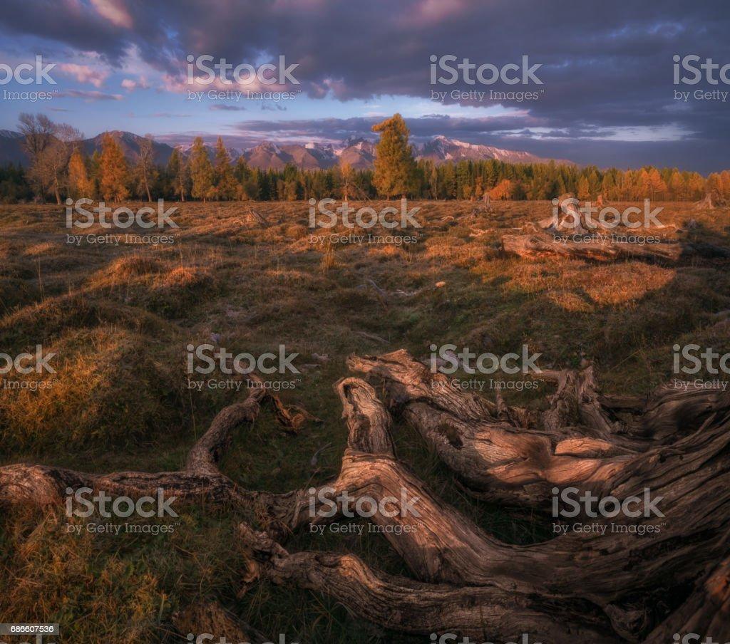 Mountain autumn landscape with forest and snow capped mountains photo libre de droits
