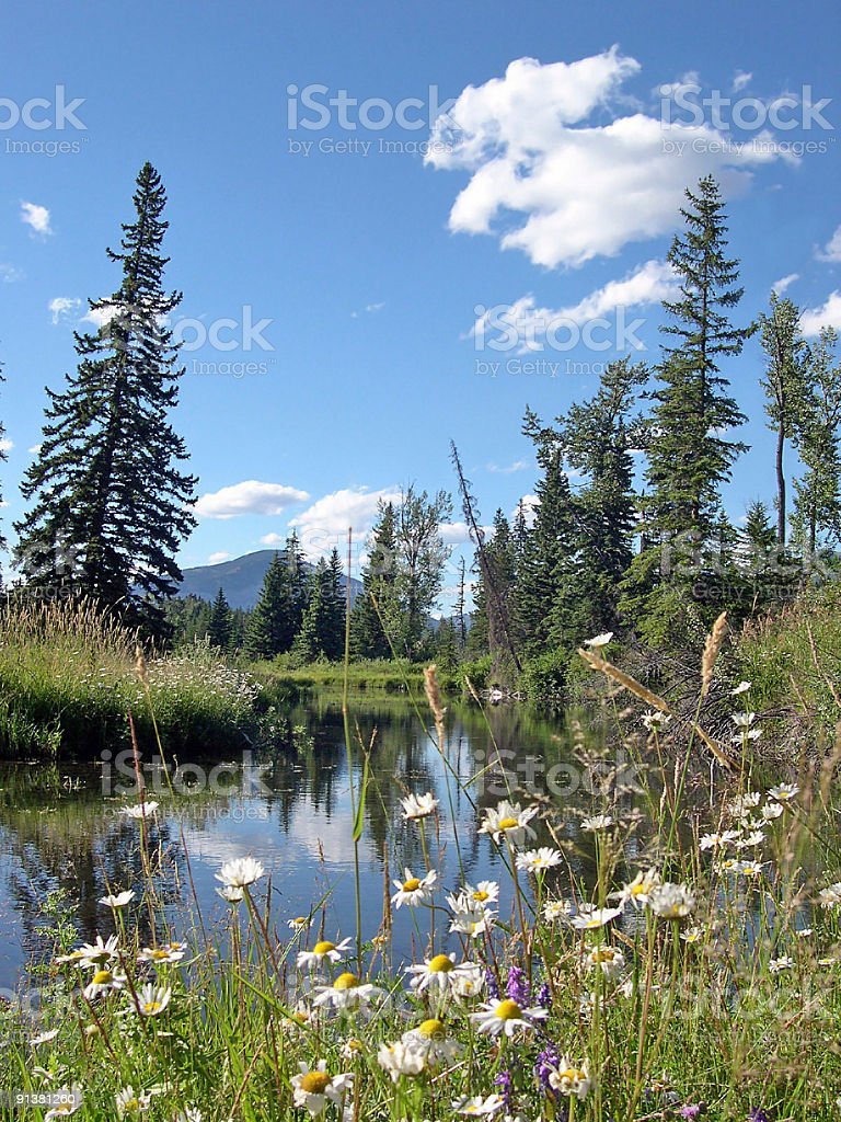 Mountain Beaver Pond With Wildflowers stock photo