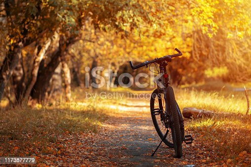 Mountain bike in the autumn forest. Early autumn. Ride a bike at sunset