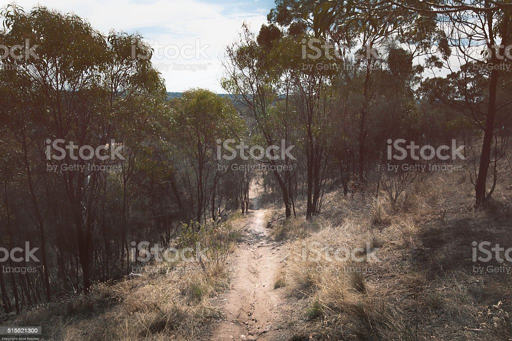 Mountain Bike or Walking Track stock photo