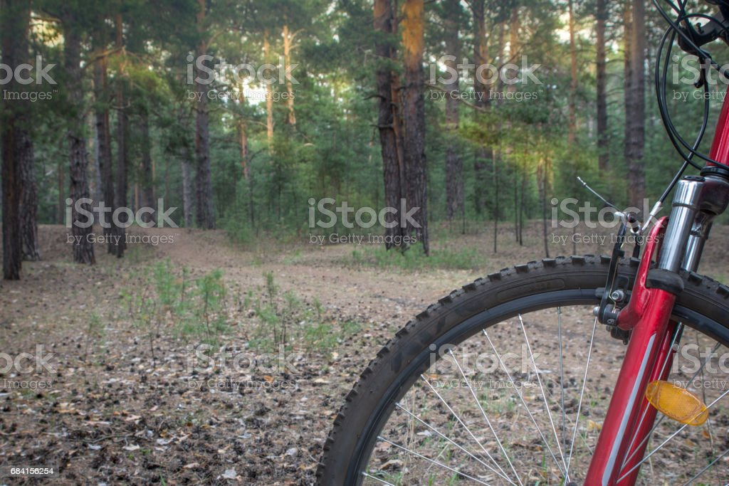 Mountain bike ready to go on a trail in the woods with sunrise background. foto stock royalty-free