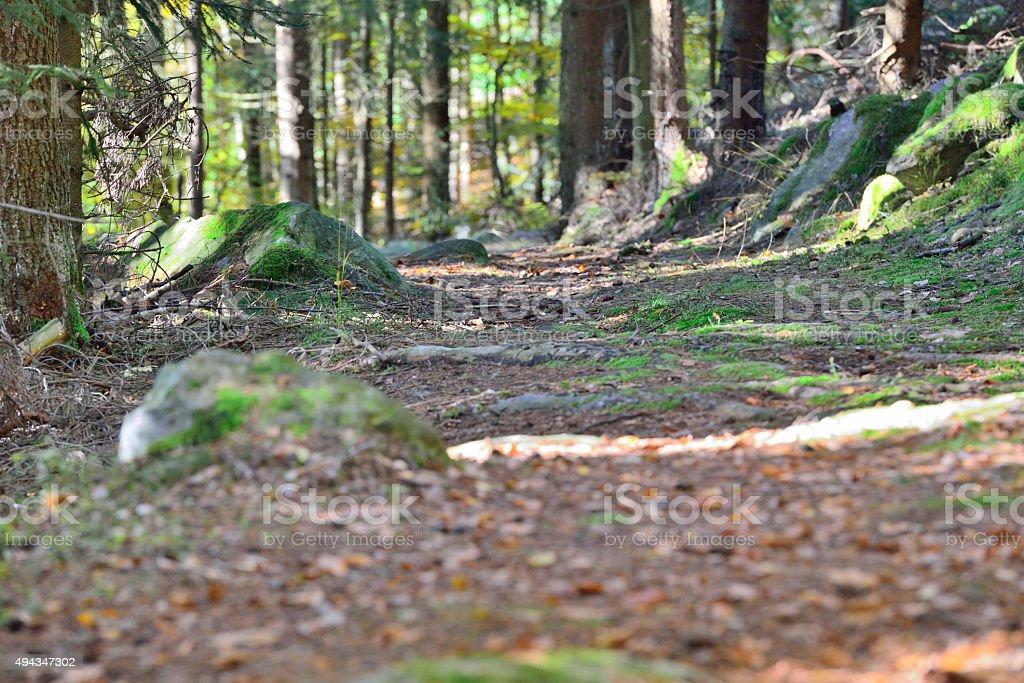 Mountain Bike Woodpath in a nature sanctuary in Austria. stock photo