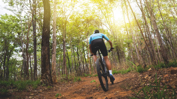 Mountain biker cyclists training in the forest stock photo