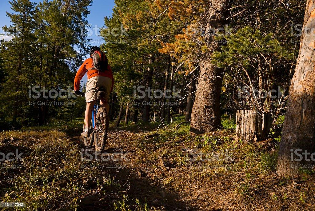 Mountain Biker Rides Singletrack Through Forest royalty-free stock photo