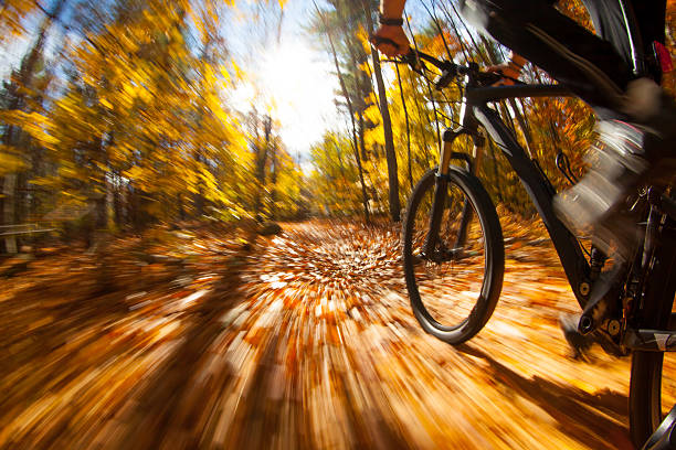 Mountain biker riding a colorful trail through the woods stock photo