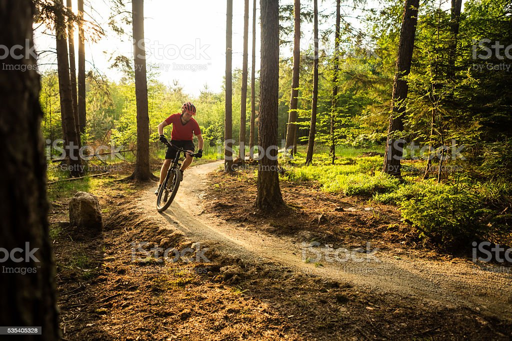 Mountain biker riding cycling in summer forest stock photo