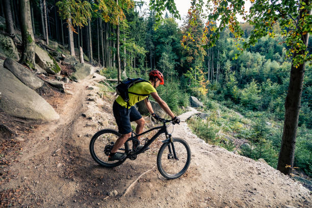Mountain biker riding on bike on forest dirt trail stock photo