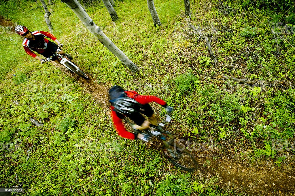 Mountain biking in forest. royalty-free stock photo