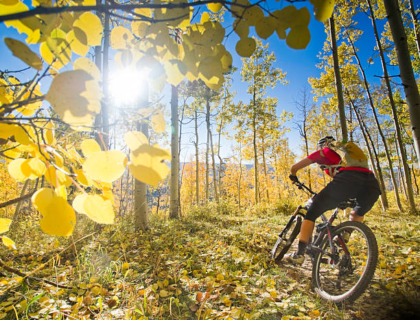 mountain biking woman cyclist mountain bikes while turning into a corner with golden yellow autumn aspens and the sunshine framing the scene.  such outdoor sports and adventure can be found in the san juan range of the colorado rocky mountains, durango.  horizontal composition. san juan mountains stock pictures, royalty-free photos & images