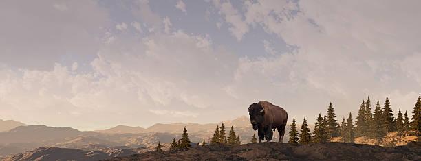 Mountain Bison bildbanksfoto
