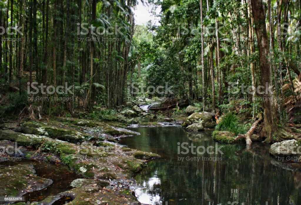 Mountain brook in Kondalilla National Park near Montville Lizenzfreies stock-foto
