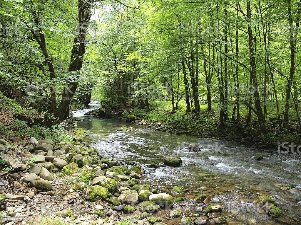 Mountain brook stock photo