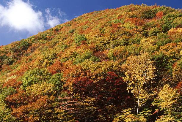 山の色 ストックフォト