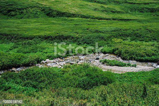 istock Mountain creek in green valley among rich vegetation of highland in sunny day. Fast water stream in brook on meadow. Vivid grass on sun. Amazing landscape of majestic Altai nature. 1033519742