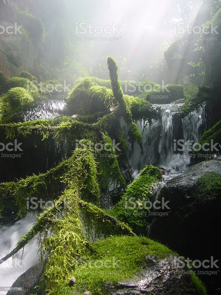 Mountain Creek with Moss and Fog stock photo
