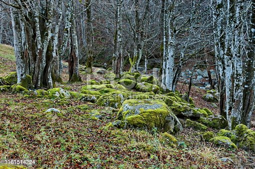 Mountain deciduous forest with big stones overgrown with moss, Balkan mountains, near Teteven, Bulgaria