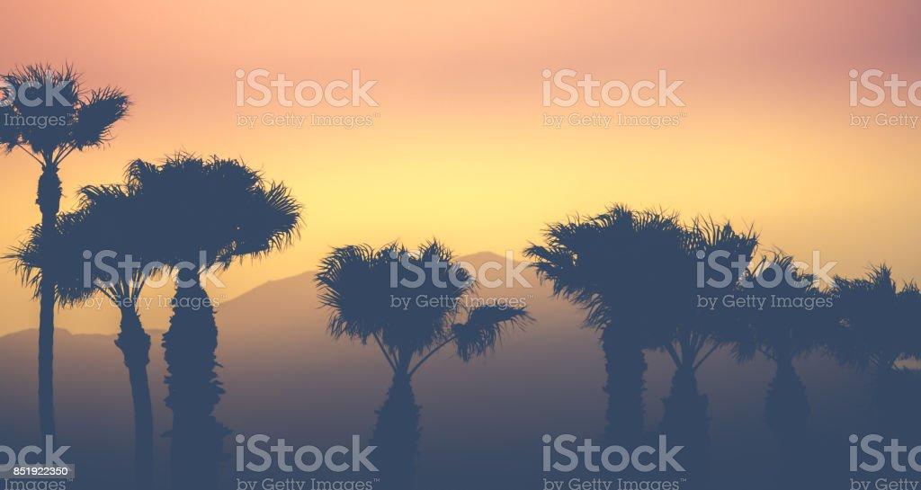 Mountain Desert Palms stock photo