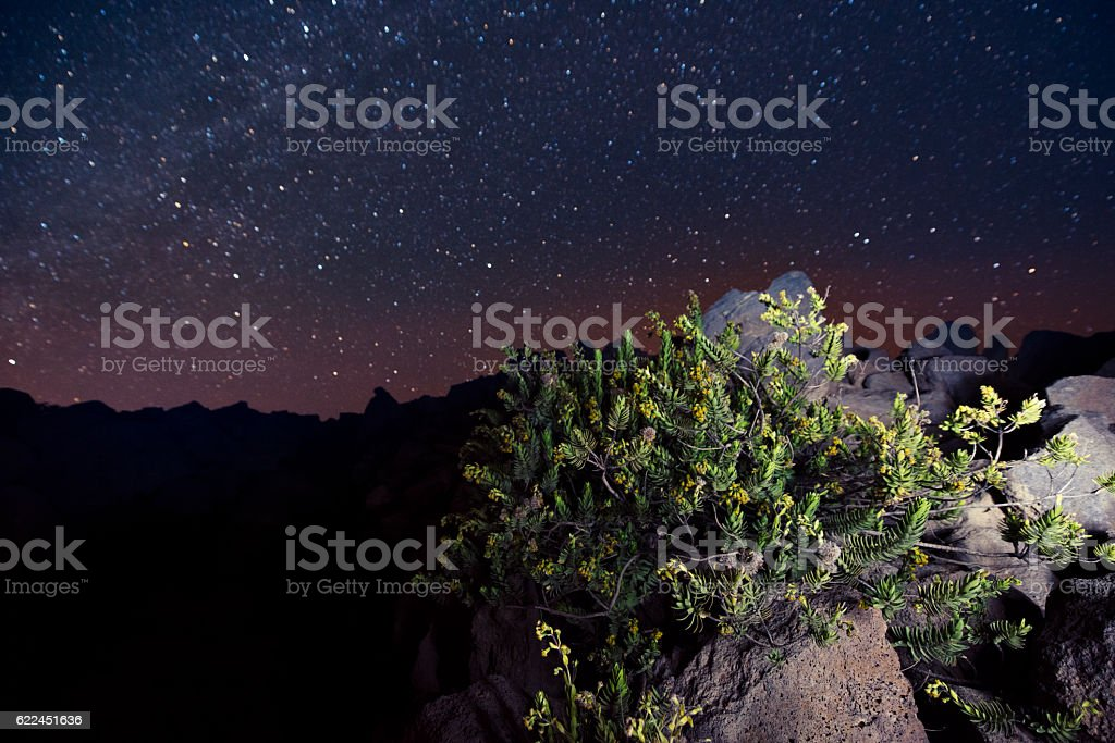 Mountain Dubautia menziesii Plant with Starry Sky Haleakala Hawaii stock photo