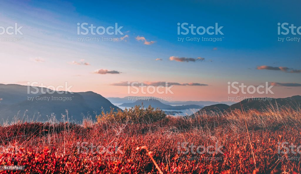 Mountain fauna stock photo