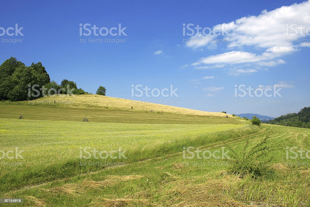 Mountain field stock photo