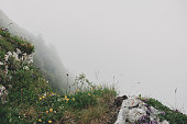 istock Mountain flowers and plants in the clouds 1284938658