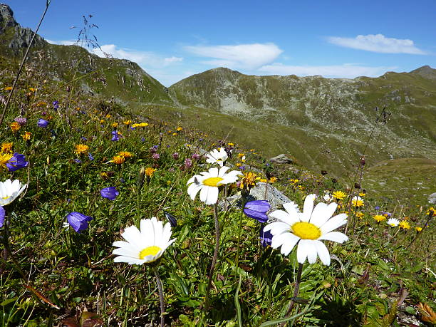 mountain Blumen – Foto