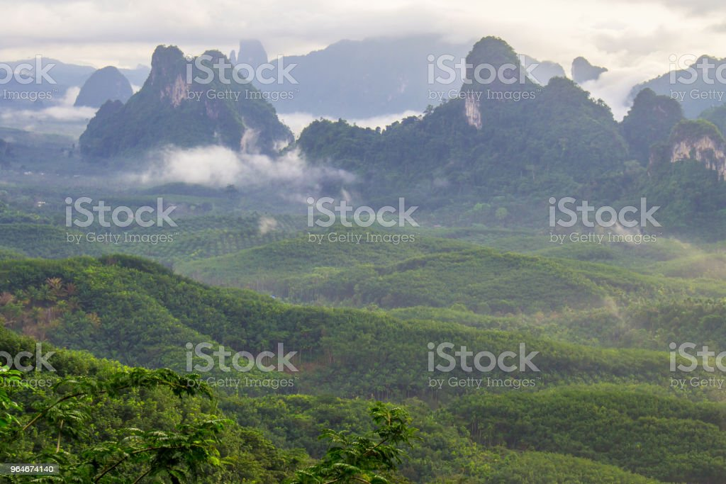Mountain fog in the forest landscape. royalty-free stock photo