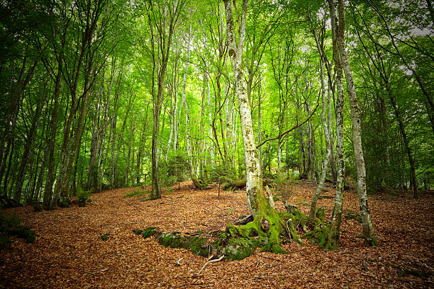 Mountain forest stock photo