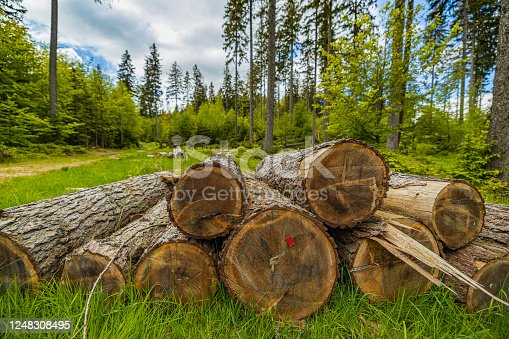 tree trunks stacked together on the meadow in a forest in the Karkonosze (Krkonoše) Mountains (Giant Mountains)