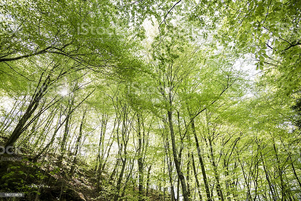 Mountain forest royalty-free stock photo