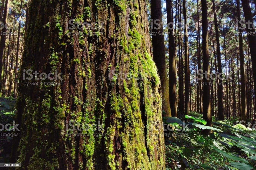 山地森林。 - 免版稅冒險圖庫照片