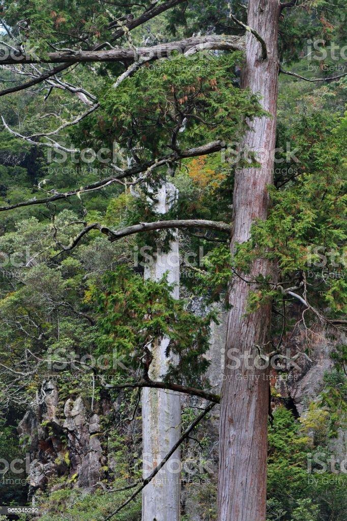 Forêt de montagne. - Photo de Aventure libre de droits
