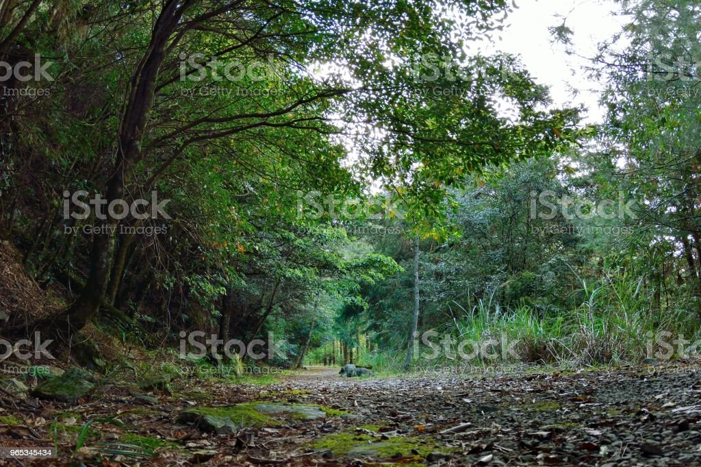 Mountain forest. zbiór zdjęć royalty-free
