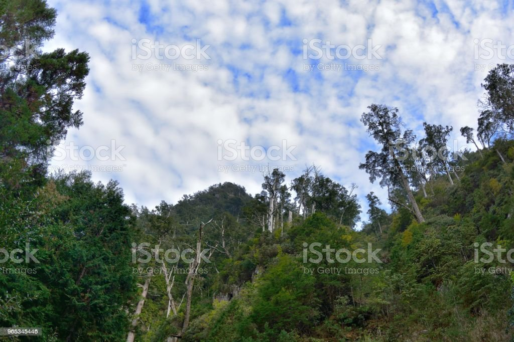 Mountain forest. royalty-free stock photo