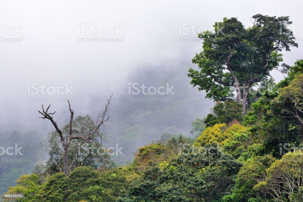 Mountain forest. - Zbiór zdjęć royalty-free (Bajka)