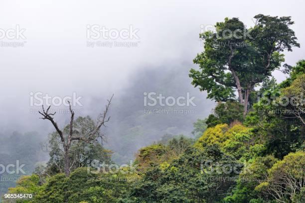 Las Górski - zdjęcia stockowe i więcej obrazów Bajka