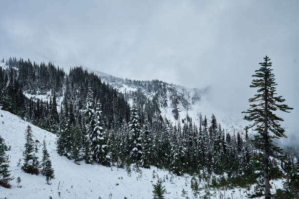 Mountain Forest with Winter Snow and Fog stock photo