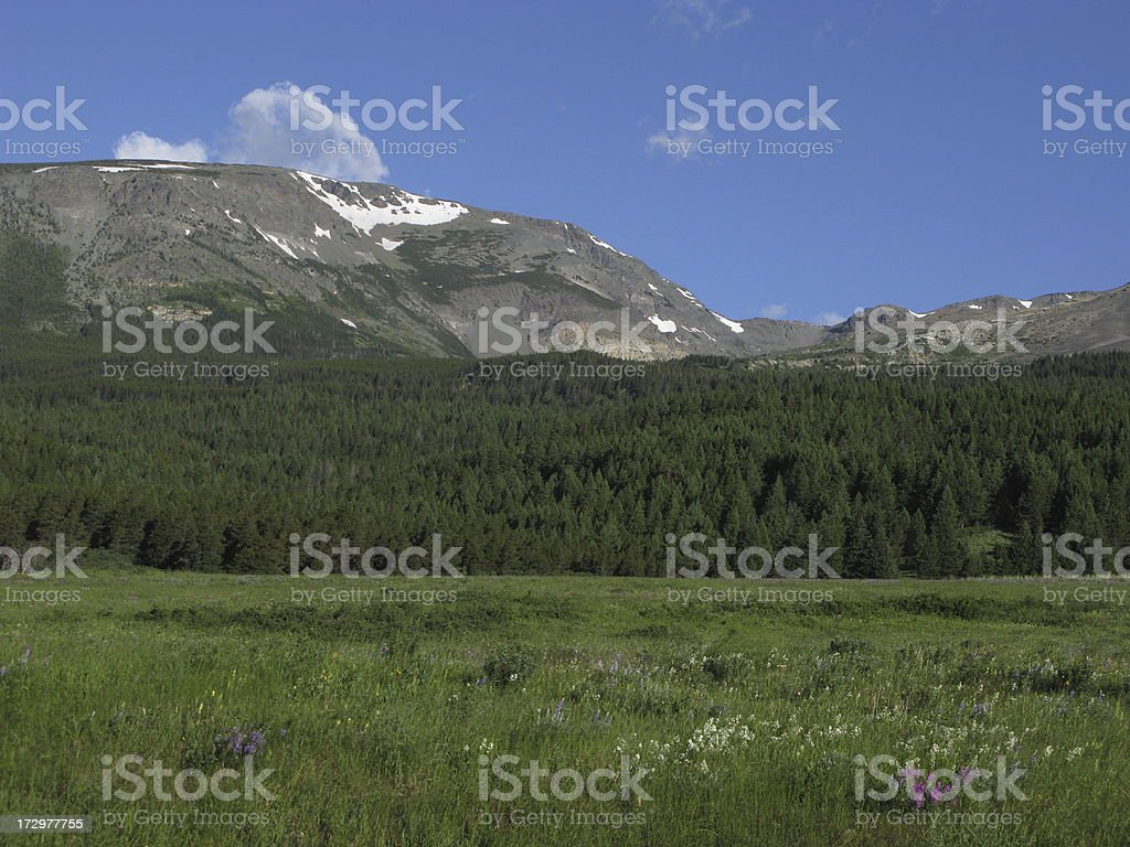 Mountain Forest Woods Glacier National Park royalty-free stock photo