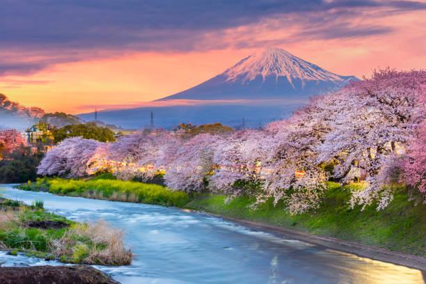 montagne fuji dans la saison de fleur de cerisier pendant le coucher du soleil. - japon photos et images de collection