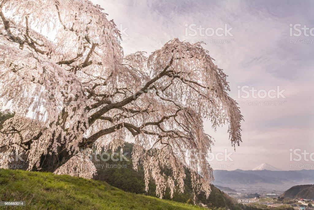 Mountain Fuji - Royalty-free Ao Ar Livre Foto de stock