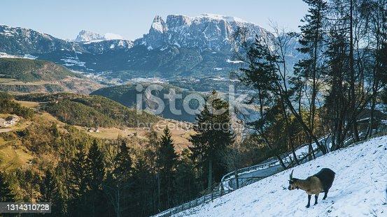 istock Mountain goat and alpine mountain. Bolzano, Italy 1314310728